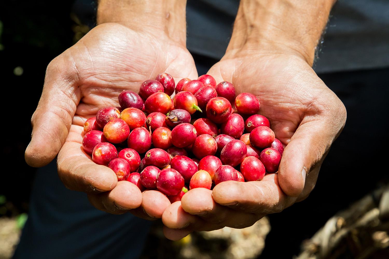 Bio Kaffeebohnen Kirschen