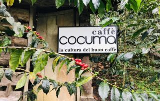 Plantation de Cocuma en Colombie