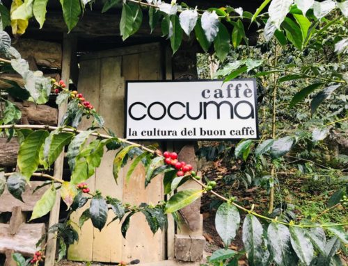 Darum ist unser Kaffee ökologisch